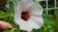 Resultado de imagen para plantas nativas buenos aires