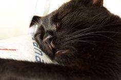 Unsere vierbeinigen Begleiter  Teil 6: Peggy Switzerland, Cats, Blog, Animals, Grey, Gatos, Kitty Cats, Animaux, Animal