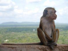 Sri Lanka, O que ver? Poker Face, Lonely Planet, Sri Lanka, Kangaroo, Animals, Vacation, Screenwriting, Temples, West Coast
