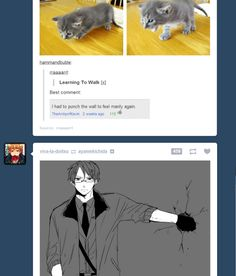hetalocked-lauy: I think we all know America has a soft spot for kittens