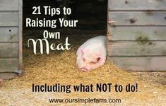 Our Simple Farm: 21 Tips to Raising Your Own Meat - Including What Not to Do! Homestead Farm, Homestead Survival, Survival Life, Homestead Living, Raising Farm Animals, Raising Chickens, Pig Farming, Backyard Farming, Farming Ideas