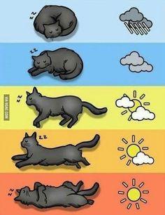 Het weerbericht