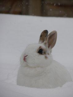 U c dis bunny? Dis here bunny rite here? Dis here bunny is MAH bunny. Baby Animals, Cute Animals, Funny Animals, Fox And Rabbit, Snow Bunnies, Bunny Rabbits, Cute Bunny, Cutest Bunnies, All Things Cute