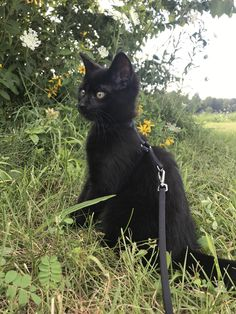 Pictures, videos, articles and questions featuring and about cats. Cute Cats And Kittens, Kittens Cutest, Ragdoll Kittens, Tabby Cats, Bengal Cats, Pretty Cats, Beautiful Cats, Black Cat Aesthetic, Cat Photography