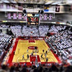 Temple Basketball