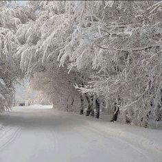 Christmas + Snow + Montreal = MAGIC