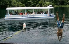 Florida discoveries: Caverns and mastodon bones at Wakulla Springs - Visitors to Wakulla Springs State Park pass by in a river tour boat as a swimmer dives into the Wakulla River in Florida.