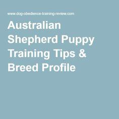 Australian Shepherd Puppy Training Tips & Breed Profile