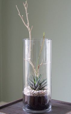 Tall vase terrarium The post Tall vase terrarium appeared first on Dekoration. Terrarium Cactus, Terrarium Centerpiece, Terrarium Wedding, Succulent Centerpieces, Cylinder Vase, Tall Vases, Air Plants, Indoor Plants, Indoor Gardening