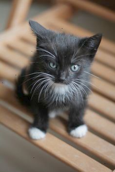 Black Kitten With White Paws Smartcat Know More About Your Cat