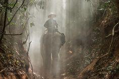 Elephant in the mist by nuttawutjaroenchai. @go4fotos