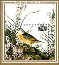 Grashopper Sparrow (Ammodramus savannarum)