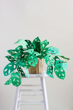 DIY Paper Swiss Cheese Plant - The House That Lars Built