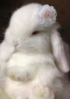 Adorable White Bunny...just one of the many reminders that Spring is Here!