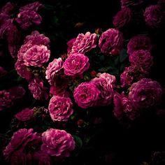 #пионы #цветы