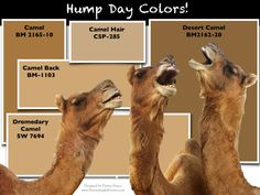 Hump Daaaaaaaaay!!! Is Camel an Ugly #Color? http://wp.me/pK9I2-Wb