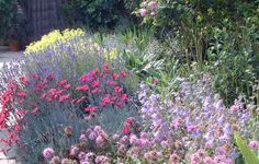 sissinghurst near rose garden