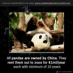 fun facts about pandas habitat
