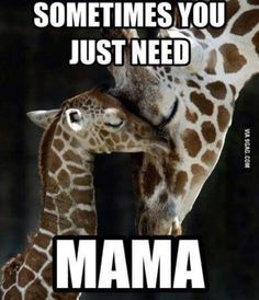 For a giraffe themed nursery? This picture would be cute next to the other giraffe-love photo. Cute Baby Animals, Animals And Pets, Animals With Their Babies, Wild Animals, Beautiful Creatures, Animals Beautiful, Sweet Pictures, Random Pictures, Tier Fotos