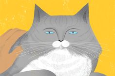 Take a moment for yourself while your cat is on your lap. | nytimes #Cats