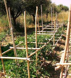 Στήριξη φυτών ντομάτας (κρεβατίνες) Garden Ideas Under Trees, Pergola, Outdoor Structures, Nature, Plants, Gardening, Vegetable Garden, Naturaleza, Outdoor Pergola