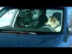 Carjam: P2/8 2011 Subaru Forester Donuts Commercial Funny Lol Dogs Ad - YouTube