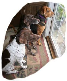 We serve the great people of Middle Tennessee and surrounding areas by both (1) installing the best invisible underground electric dog fence system for a lower price than even the cheap-quality systems on the market, and (2) we repair those other cheap systems that someone else sold to you. We don't operate like that, and we are available to you at all times. We are THE GUYS to go to for hidden pet fencing containment - quality and value! http://www.nashvillehiddendogfence.com/