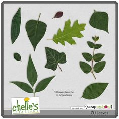 CU Leaves by Chelle's Creations