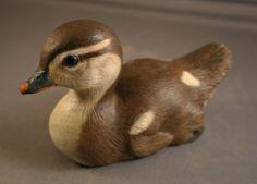 Baby Wood Duck 6