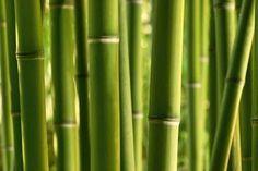 Bamboo L bij Behangwebshop
