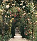 This is so pretty I love arched trellises!
