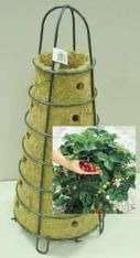 Similar to the burlap sack idea with strawberries ... I have strawberriers growing from my burlap sack already.