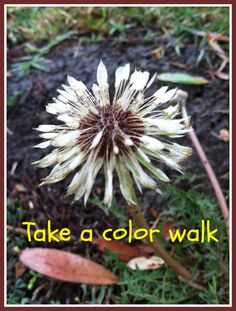 Take a Color Walk