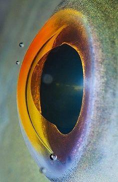 Oeil ? Planete ?
