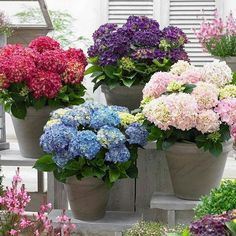 10 Pieces/Pack Hydrangea Seeds Potted Balcony Planting Is Simple Mixed Hydrangea Flowers Home Plant Bonsai Viburnum Hydrangea Potted, Buy Hydrangeas, Hortensia Hydrangea, Hydrangea Colors, Hydrangea Care, Hydrangea Macrophylla, Hydrangea Flower, Balcony Flowers, Flower Planters