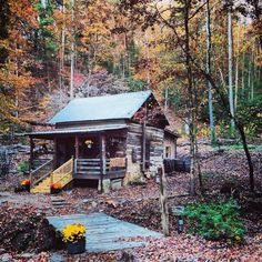 Log cabin in the woods ......