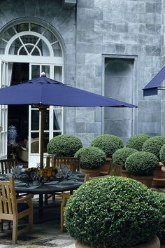 Dining in the boxwoods