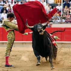 Bull fighting is a very cultural sporting even which happens in Spain. People get tickets to go and watch this event.