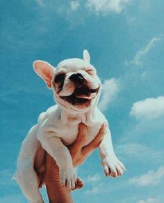 𝕡𝕚𝕟𝕥𝕖𝕣𝕖𝕤𝕥 ✰ 𝕣𝕚𝕤𝕤𝕒𝕛𝕒𝕞 イタリア パグ 犬 🐶 animals dog puppy Cute Little Animals, Cute Funny Animals, Cute Dogs And Puppies, Doggies, French Bulldog Puppies, Cute Creatures, Animals And Pets, Puppy Love, Fur Babies
