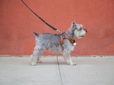 Deetach is an innovative accessories system from Chico&DOG that includes a leather harness, leash, shearling coat, treat pouch, and LED light.