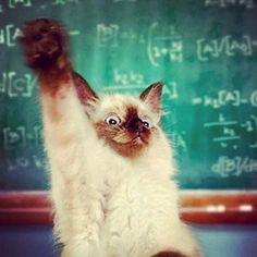 #Cats #Cat #Kittens #Kitten #Kitty #Pets #Pet #Meow #Moe #MeowMoe #CuteCats   Smart guy! ...   http://www.meowmoe.com/1607/