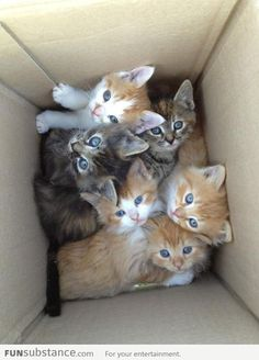 Warning - Box Contains More Cuteness Than You Can Handle