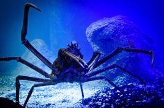 Animal, Water, Underwater, Aquarium, Panzer, Cancer