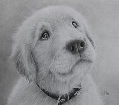 Pensive Puppy - Graphite Pencil Drawing of a Golden Retriever by Miroslav Sunjkic #dog #puppy #retriever #pencil #drawing #realistic #pet #animal #artwork #pencilmaestro