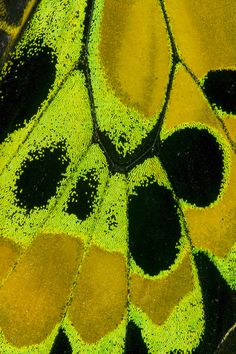 Butterfly Wing Details photograph by: Darrell Gulin Butterfly Effect, Butterfly Pattern, Butterfly Wings, Beautiful Bugs, Beautiful Butterflies, Patterns In Nature, Textures Patterns, Dot Painting Tools, Foto Macro