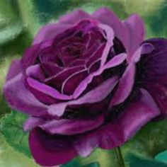 Origem da Rosa - Flores Jardim