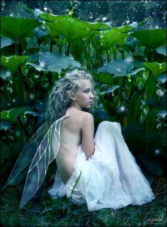 Dew Fairy~