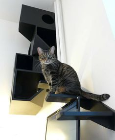 Catissa is a four storey cat house designed by Russian design studio mojorno. The piece combines all the features cats and humans desire: it is attached to the wall, freeing the floor space, provid. Homemade Cat Tower, Diy Cat Tower, Rustic Cat Furniture, Cat Apartment, Cat Cube, Cat Castle, Geometric Cat, Cat Towers, Cat Stands