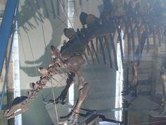 Stegosaurus Natural History Museum London