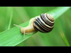 Jak pozbyć się ślimaków z ogrodu? Sprawdzony sposób! Snail, Youtube, Youtubers, Slug, Youtube Movies